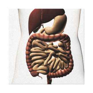 The Human Digestive System 5 Canvas Print
