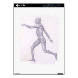 The Human Figure, lateral view, from the series 'A iPad 3 Decals