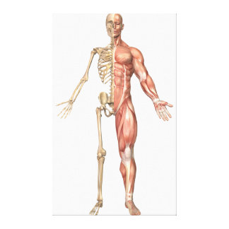 The Human Skeleton And Muscular System, Front Canvas Print
