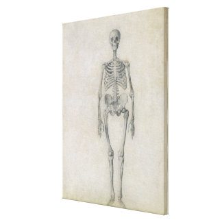 The Human Skeleton, anterior view, from the series Canvas Print
