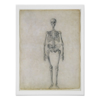 The Human Skeleton, anterior view, from the series Poster