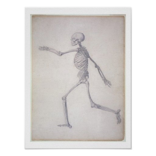 The Human Skeleton, lateral view, from the series Poster
