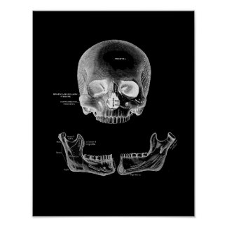 The Human Skull and Jaw Anatomy Print