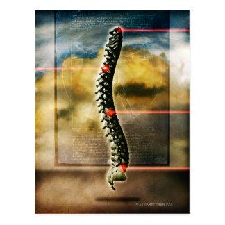 The human spine postcard