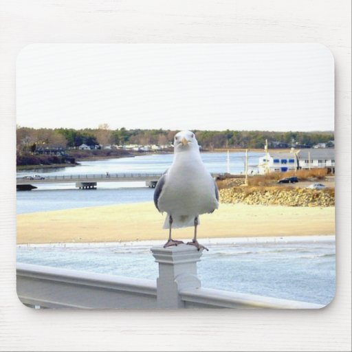 The Hungry Seagull Mouse Pad