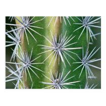 The Huntington Botanical Garden, Octopus Cactus Postcard