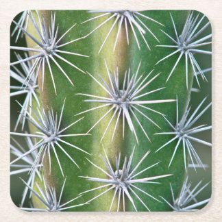 The Huntington Botanical Garden, Octopus Cactus Square Paper Coaster