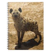 The hyena notebook