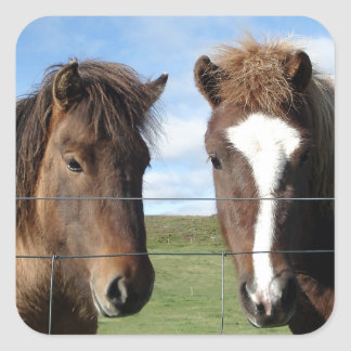 The Icelandic Horse - A Real Friend Square Sticker