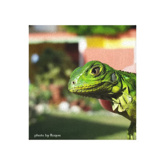 the iguana in my house canvas print