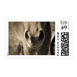 The Incredible Edible Mr. Ed Postage Stamp