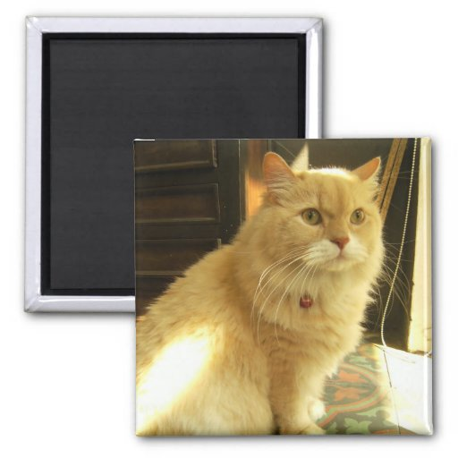 The Inn-keeper's Cat 2 Inch Square Magnet