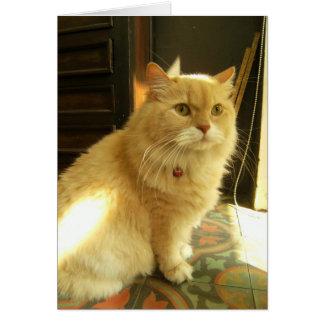 The Inn-keeper's Cat Card
