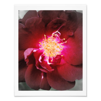 The Inner Fire - Red Rose Photography Photo Print