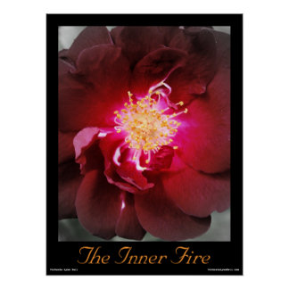 The Inner Fire - Red Rose Photography Poster