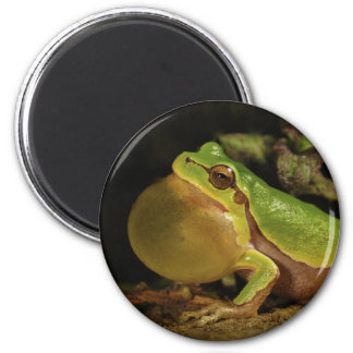 The Italian Tree Frog Hyla Intermedia 2 Inch Round Magnet