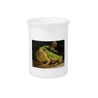 The Italian Tree Frog Hyla Intermedia Beverage Pitcher