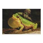 The Italian Tree Frog Hyla Intermedia Canvas Print