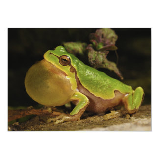 The Italian Tree Frog Hyla Intermedia 5x7 Paper Invitation Card