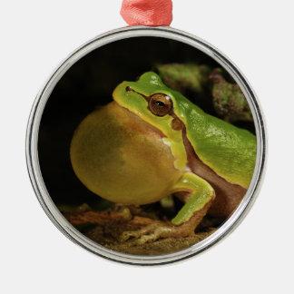 The Italian Tree Frog Hyla Intermedia Metal Ornament