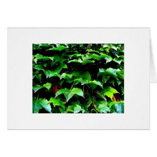 The Ivy. Wrigley Field Card