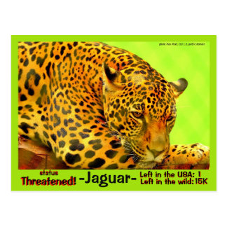 The Jaguar is hunting for our help  ~~ Postcard