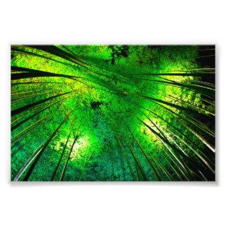 The Japanese blue bamboo Photo Print