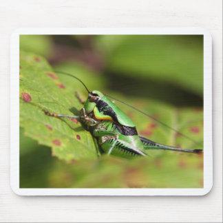 The katydid cricket Eupholidoptera chabrieri Mouse Pad