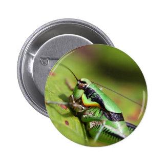 The katydid cricket Eupholidoptera chabrieri Pinback Button