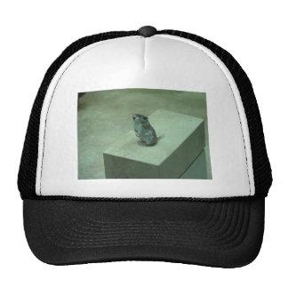 The Killer Mouse (Onychomys leucogaster) howls! Hat