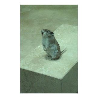 The Killer Mouse (Onychomys leucogaster) howls! Stationery
