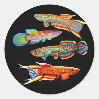 The Killifish Sticker