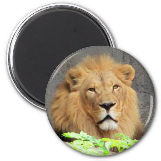 The King, Male Lion 2 Inch Round Magnet