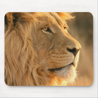 The king of Africa animals, LION face Mouse Pad
