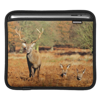 The King's Deer, red deer stags 2 Sleeve For iPads