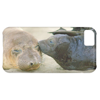 The Kiss - Northern Elephant Pup iphone5C case