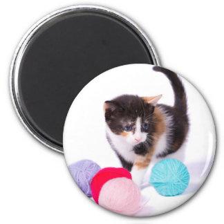 The Kitten Magnet