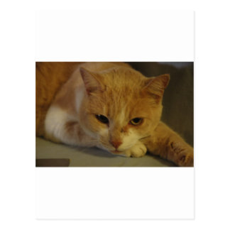 The kitty cat postcard