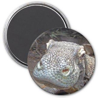 The Komodo Look Magnet