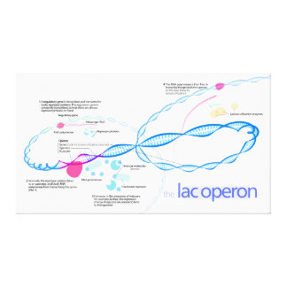 The Lac Operon Diagram Stretched Canvas Print