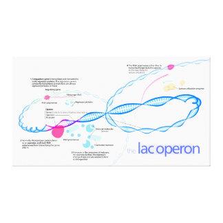 The Lac Operon Diagram Canvas Print