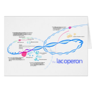 The Lac Operon Diagram Greeting Card