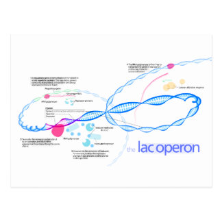 The Lac Operon Diagram Postcard