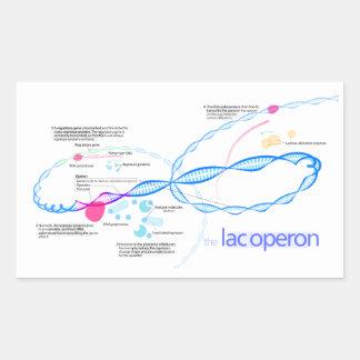The Lac Operon Diagram Rectangular Sticker