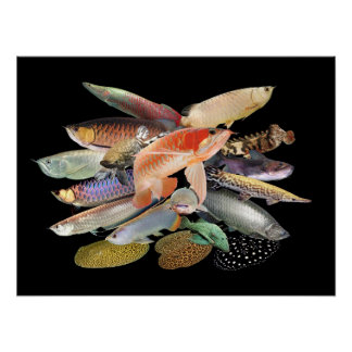 The large-sized tropical fish which springs out, N Poster
