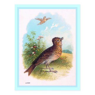 """The Lark"" Vintage Illustration Postcard"