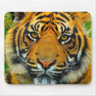 The Last TIger Mouse Pad