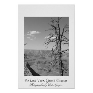 the Last Tree, Grand Canyon Poster
