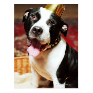 The latin name for all domestic dogs is Canis Postcard
