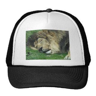 The Lazy Lion Baseball Truckers Cap Trucker Hat